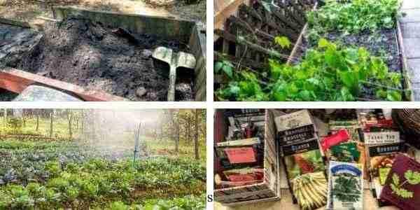 4 Main steps of starting self-reliant gardening