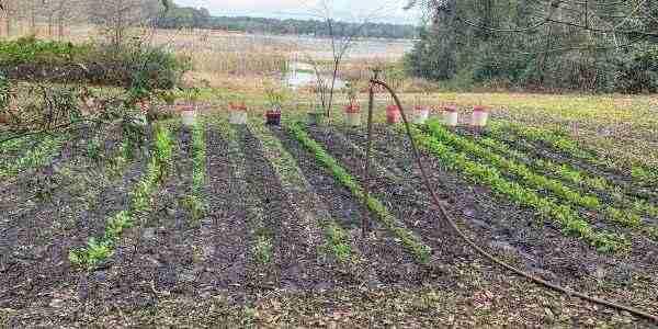 Using a sprinkler for the new vegetable garden