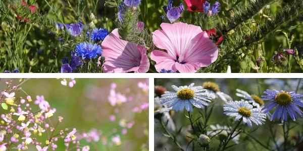Examples of pollinator gardens