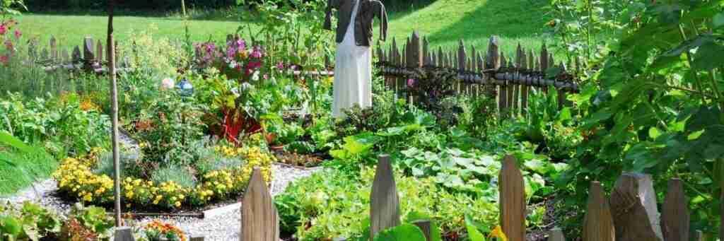Start here with gardening posts.