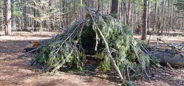 Shelter built from pine limbs