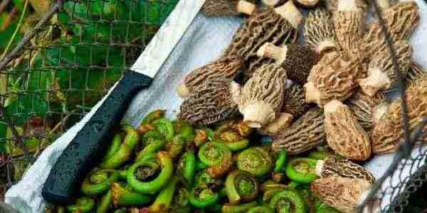 Foraged mushrooms and ferns