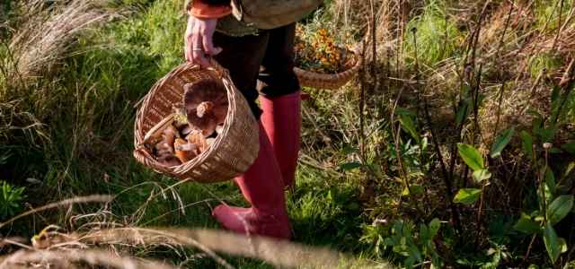 Foraged plants in baskets