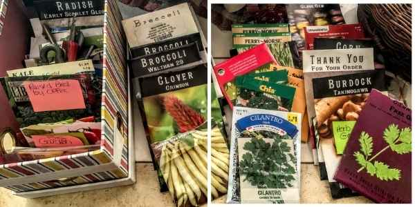 Mix of seeds for the vegetable garden