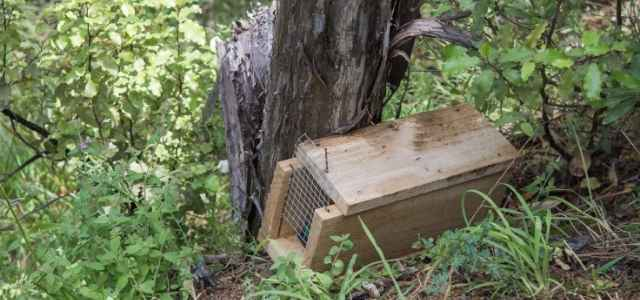 Assembling wild animal traps are important survival skills.