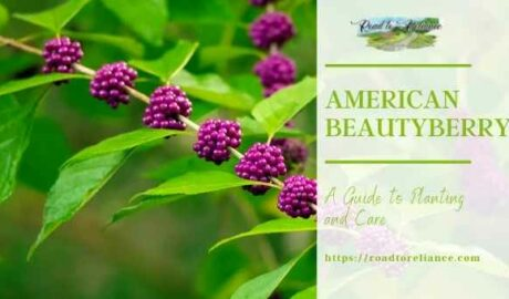 American Beautyberry featured image