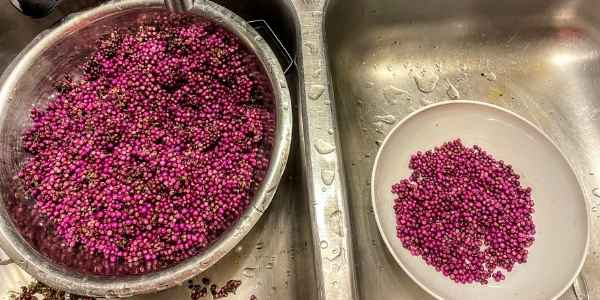 Beautyberries in the sink