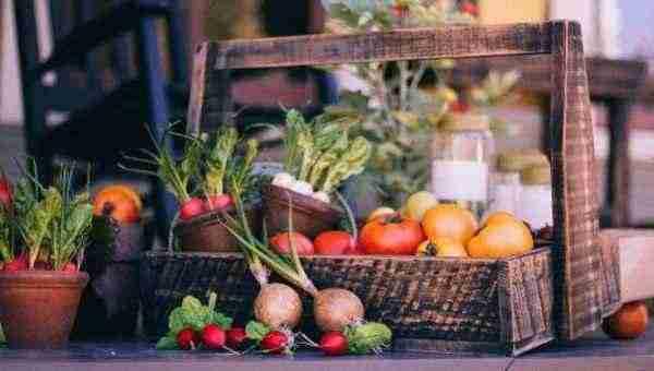 Harvest of veggies